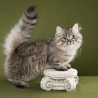 Retke i neobične rase mačaka