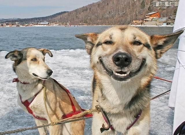 pessimistic and optimistic dog