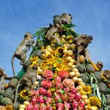 Jesenje manifestacije posvećene životinjama