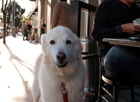 Amerika uskoro dobija prvi kafić za pse