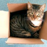 Zašto mačke vole kutije?