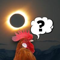 Kokoške i pomračenje Sunca
