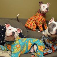 Pidžame za pit bul terijere