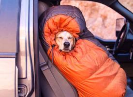 Evakuacija ljubimaca i životinja u vanrednim situacijama