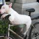 Vožnja bicikla u društvu psa