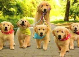 Ginisov rekorder: Pas sa najvise štenaca