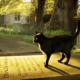 Mačke i sujeverje