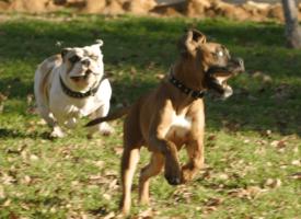 7 razloga zašto je važna rana socijalizacija psa