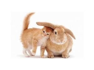 Zec i maca
