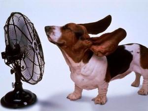 Psi vrućina