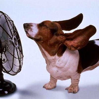 Kako da rashladite svog kućnog ljubimca?