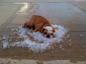 rashladite psa