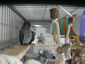 smestaj za papagaja