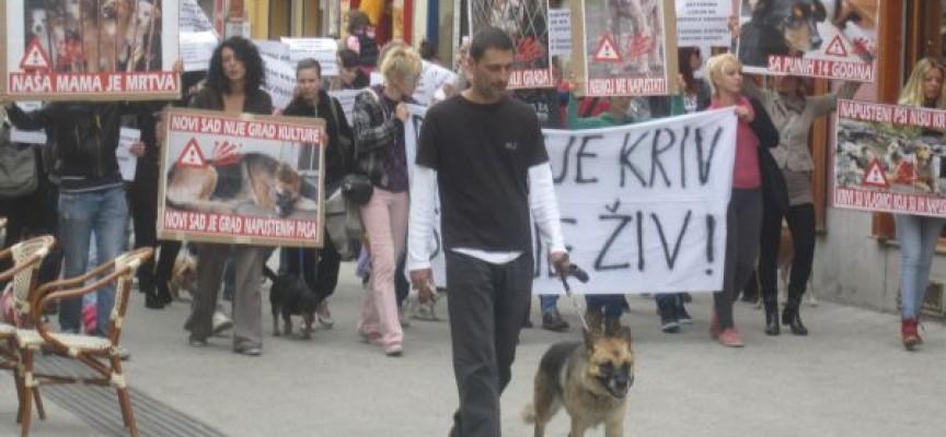 """""""Pravda za Lajku"""" – pas nije kriv što je živ!"""