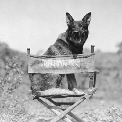 10 najpopularnijih pasa na filmu