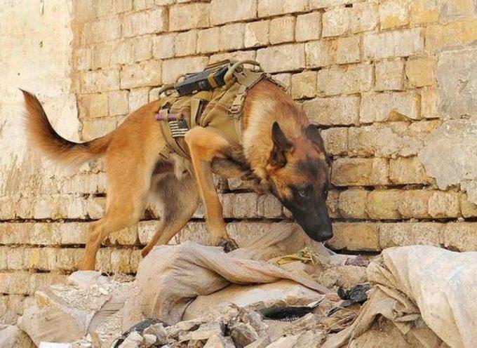 Istraživanje: efikasnija i lakša obuka pasa za detekciju eksploziva