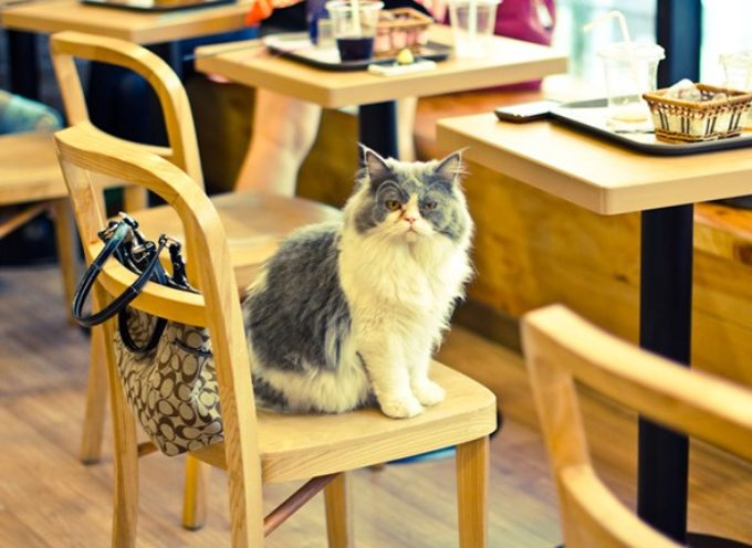 Kafe bar po meri ljubitelja mačaka