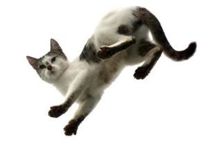 cats-fall-feet