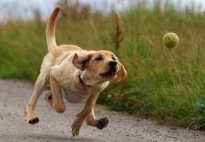 igra pas