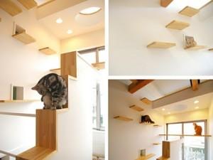 japan model stan za macke