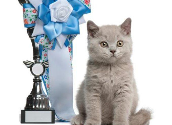 Mačji rekordi za Ginisa