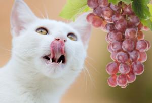macka grozdje