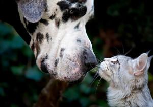 macke i psi prijatelji
