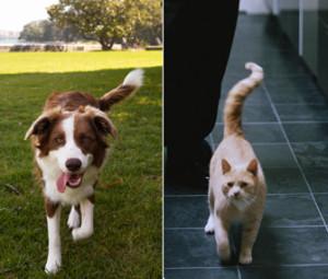 macke i psi rep
