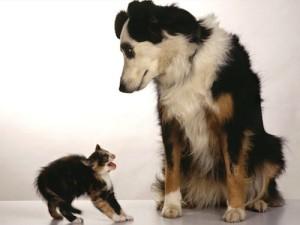 pas i macka telo
