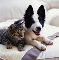 pas i macka usta