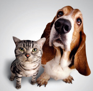 psi i macke usi