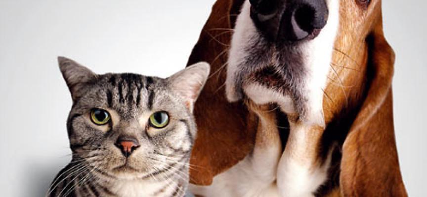 Govor tela: psi vs mačke