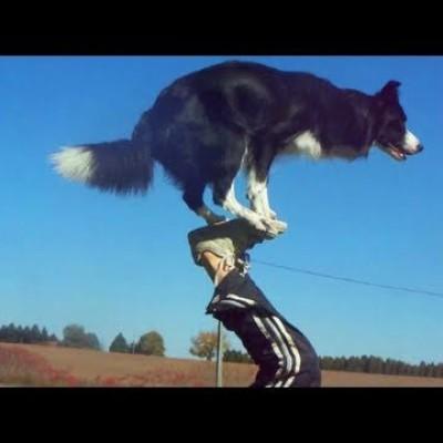 Pseći trikovi (VIDEO)