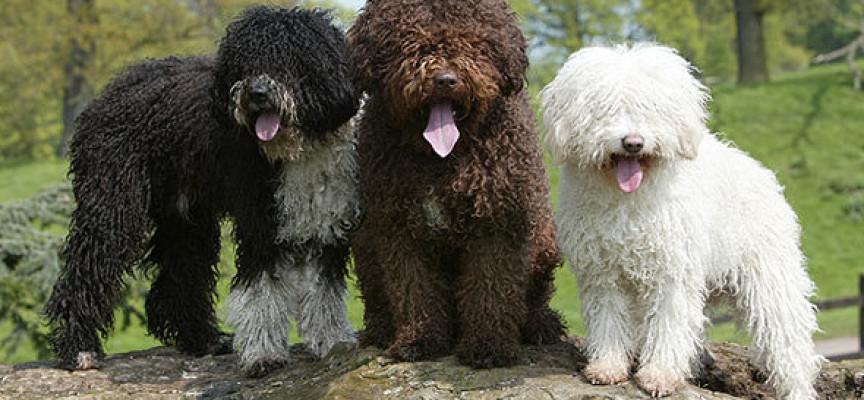 Psi o kojima priča Amerika