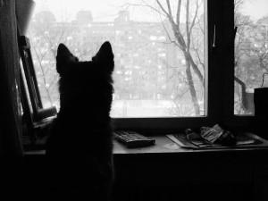 Pas na prozru