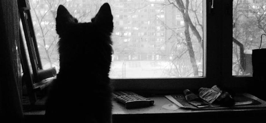 10 najvećih mitova o psima