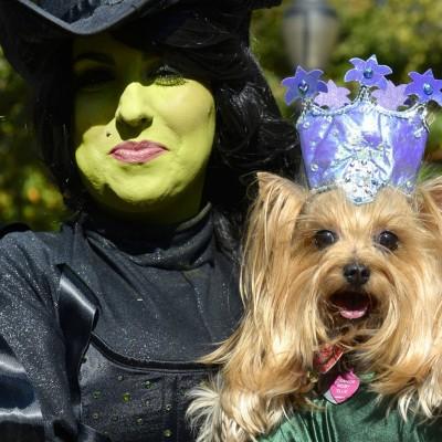 I psi vole Halloween