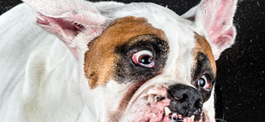 Protresi otresi – urnebesno smešni psi (VIDEO)