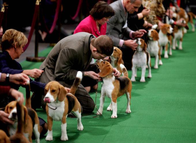 Međunarodna izložba pasa i sajam sitnih životinja