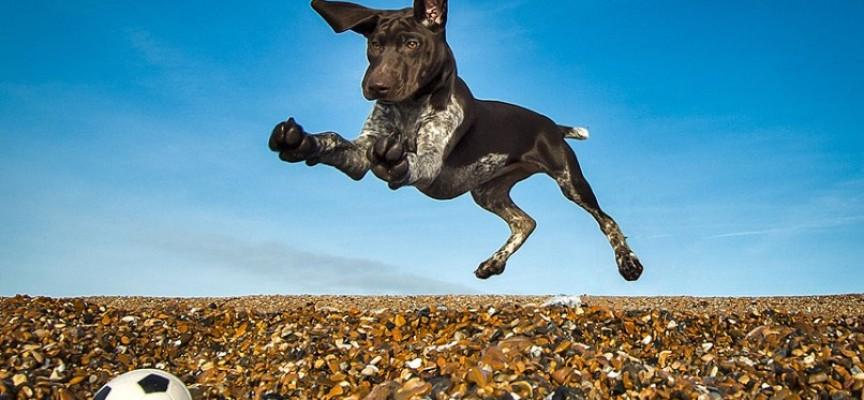 Najbolje fotografije pasa za 2013. godinu