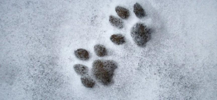 Pripremite ljubimca za zimu: Kako zaštititi psu šape na snegu
