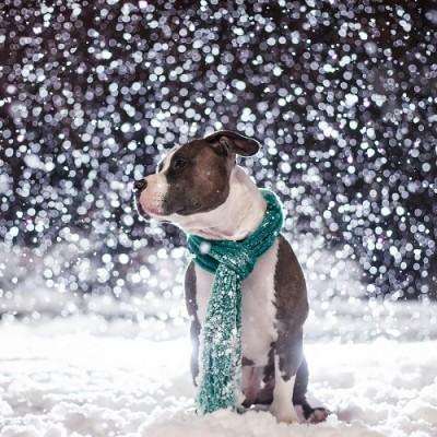 Hladni dani: Pripremite psa za niske temperature i sneg