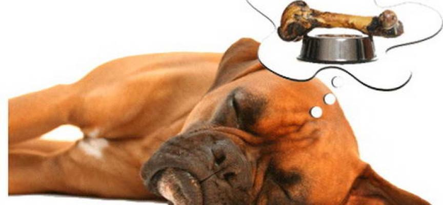 Ponašanje pasa: Da li psi sanjaju?