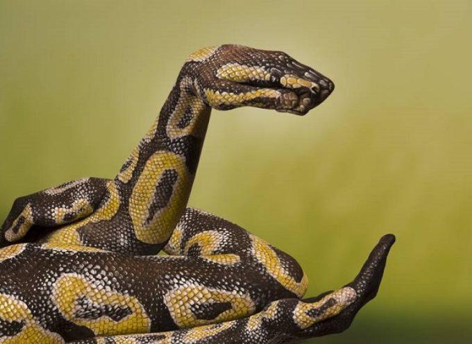 Da li je na slici prava zmija?