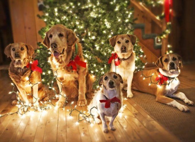 Novogodišnje odluke jednog psa