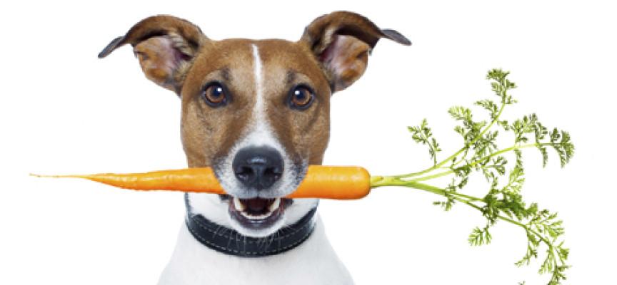 Lista hrane koja je dobra za pse