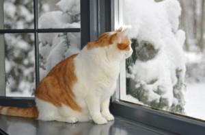 macka posmatra kroz prozor
