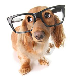 pametni psi 1