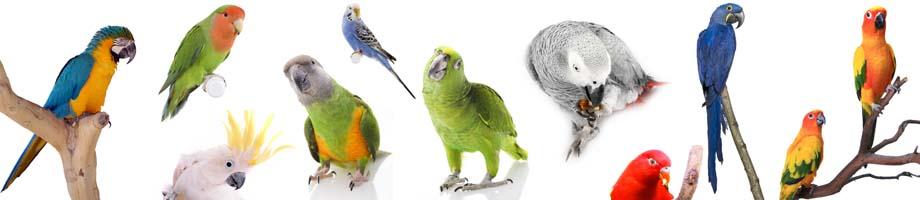 papagaji
