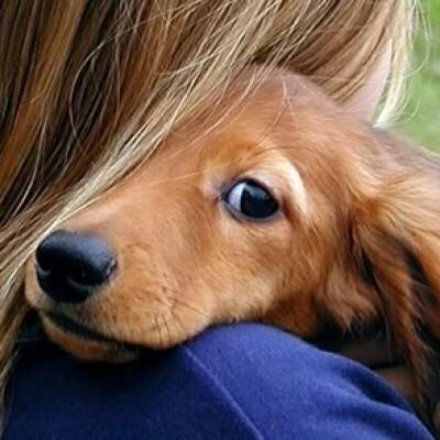 Kako pas pokazuje ljubav, privrženost i odanost